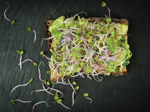 Avocado Toast Toulouse livraison lunch box